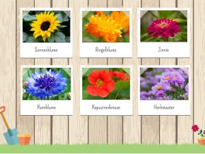 Blumen saeen im Mai