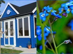 gartenhaus-blumenbeet-blau
