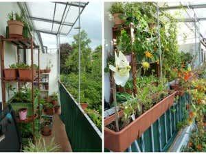 Blumen auf Balkongarten