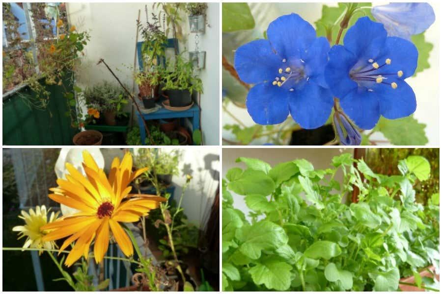 Blumenvielfalt auf Balkon
