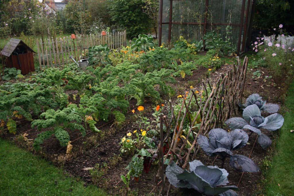 Blick auf Maries fruchtbaren Gemüsegarten mit einer Vielfalt an verschiedenen Gemüsesorten.