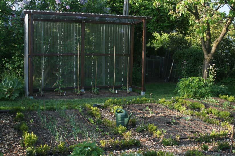 Extrem Tomatenhaus selbstgebaut: So schütze ich meine Tomaten ZR34