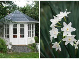 Weisser Gartenpavillon und weisse Blume