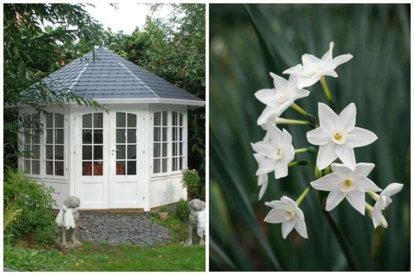 Weiße Blumen im Garten – Inspiration zur Gartengestaltung