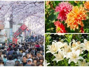 Hanakotoba - die Blumensprache Japans