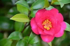 Blumen Und Ihre Bedeutung Das Hanakotoba Lexikon