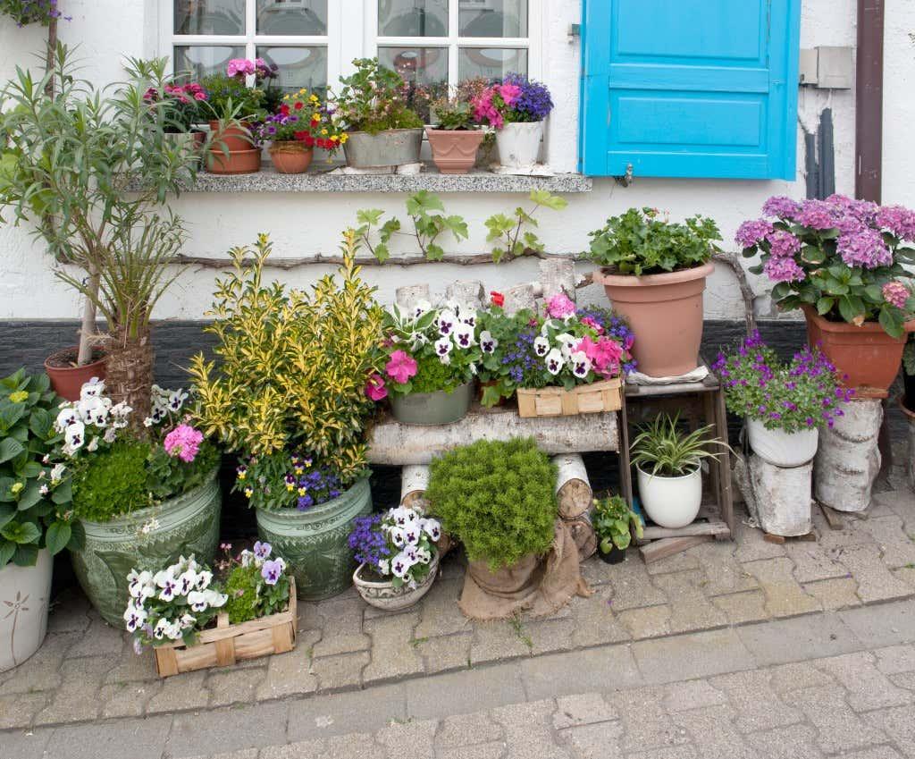 Gruppe von Blumentöpfen vor einer Hauswand