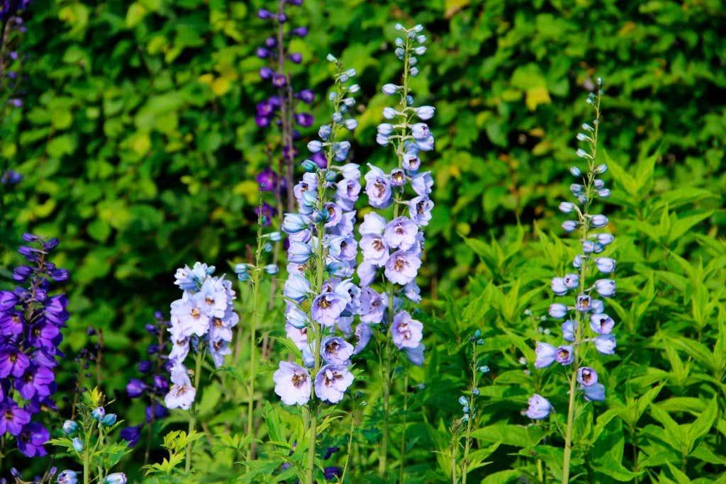 Blumen Giessen Im Urlaub 8 Tipps Zum Ferienfesten Garten