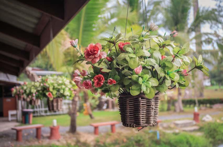 Pergola mit Hängepflanze