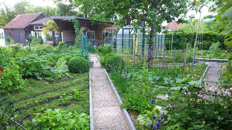 Achims Gemüsegarten - Gartenblogs