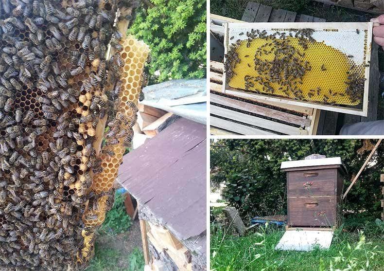 Bienen, Imkerei - Gartenblogs