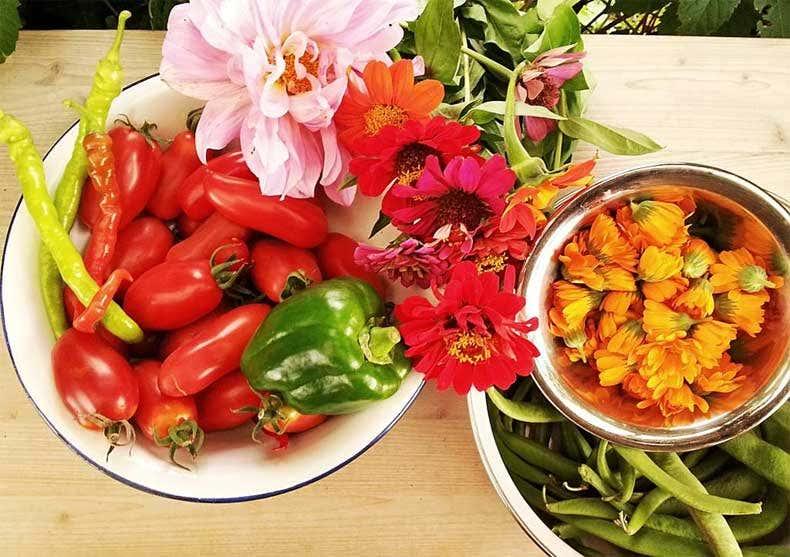 Gemüse-Ernte, Gartenblogs