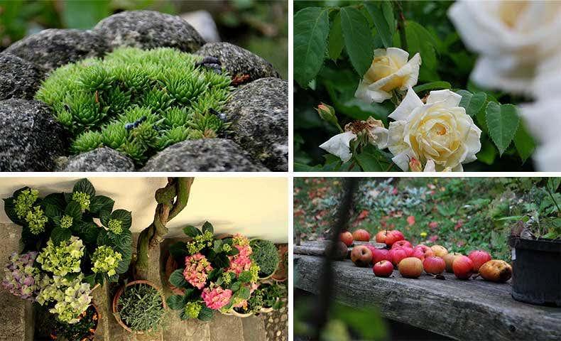 Garteling:  Pflanzenbilder-Collage, Gartenblogs