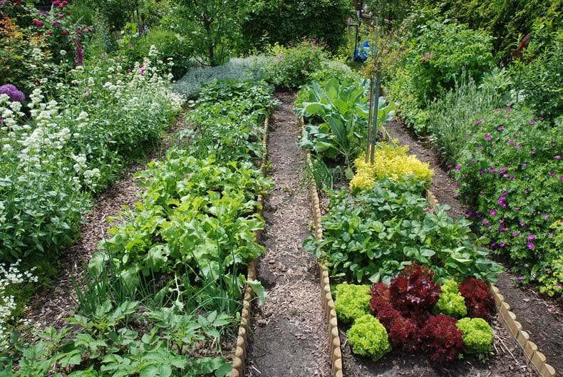 Gemüsebeet im Berlingarten - Gartenblogs