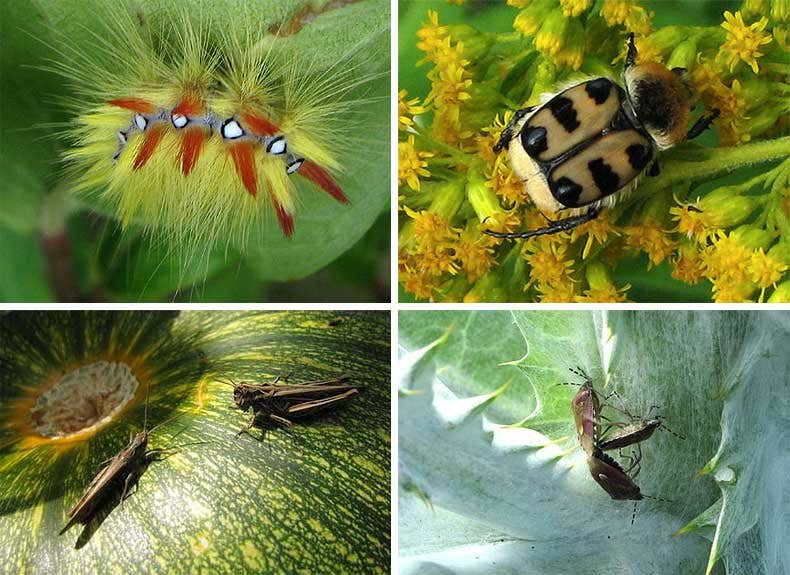 Tierleben im wilden Garten - Gartenblogs