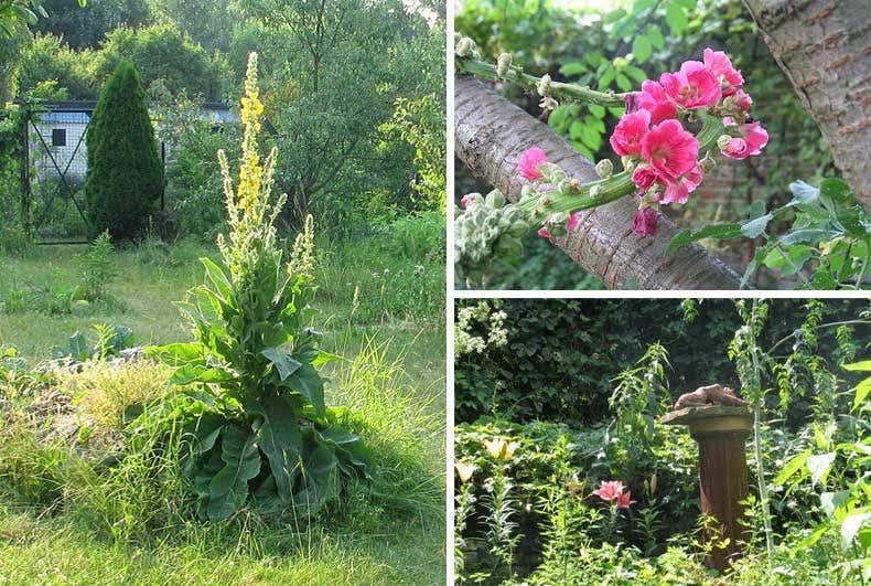 wilder Garten - Gartenblogs