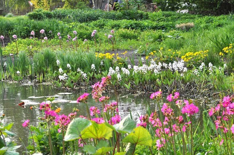 Wildstauden am Teich - Gartenblogs