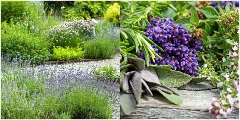 Kräuter und Lavendel