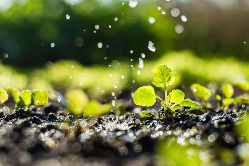 Regenwasser ist ökologisch für Pflanzen.