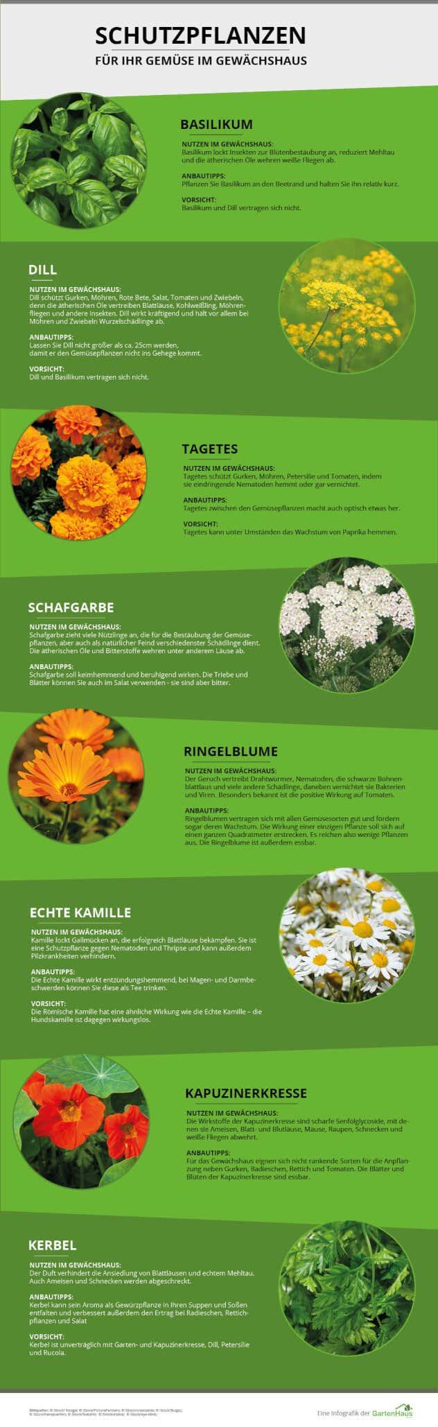 schutzpflanzen grafik fuer gewaechshaus