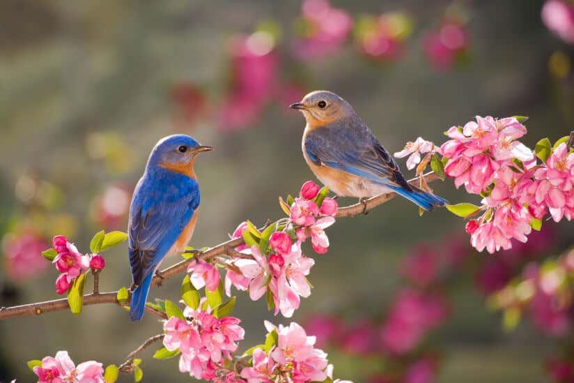 Vogel Anlocken So Gestalten Sie Ihren Garten Vogelfreundlich