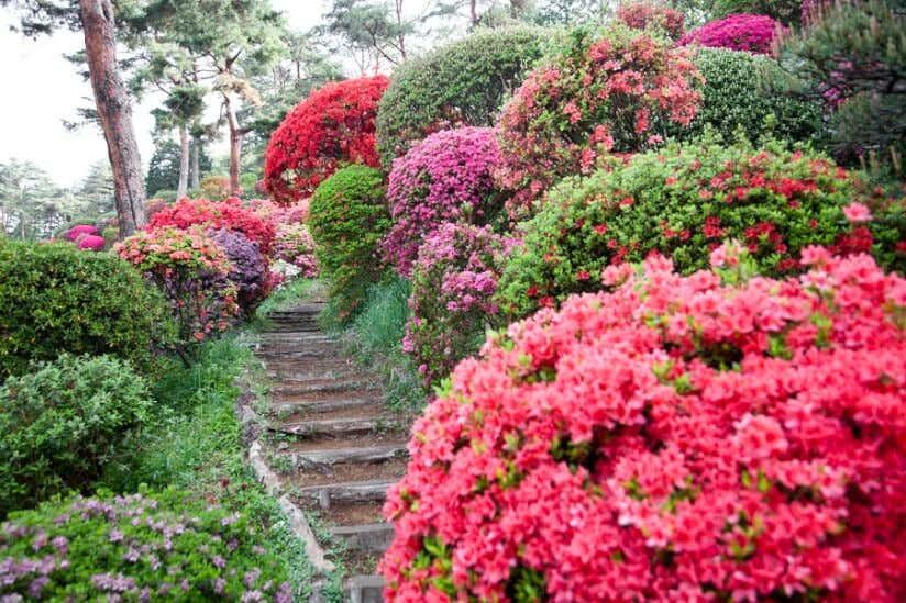 Rhododendron am Wegensrand