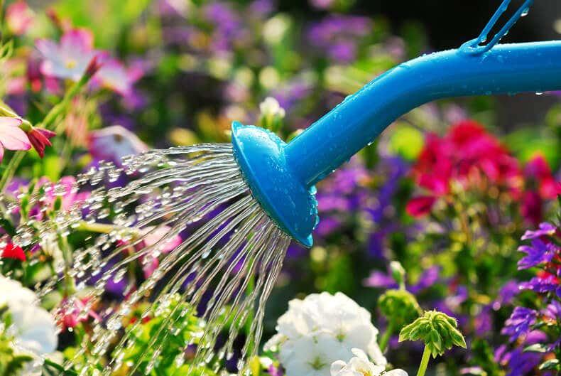 Blaue Gießkanne im Blumenbeet
