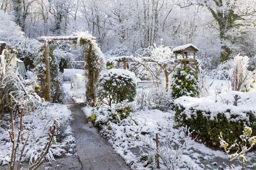 Garten Im Winter winterpflanzen im garten pflegetipps für beliebte winterblü