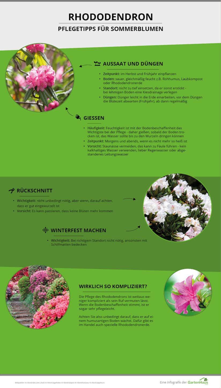 Pflegetipps Rhododendron