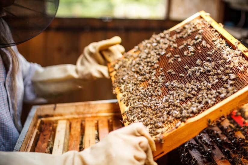Rahmen mit Bienen