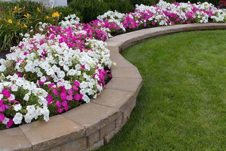 Weiss pinkes Blumenbeet