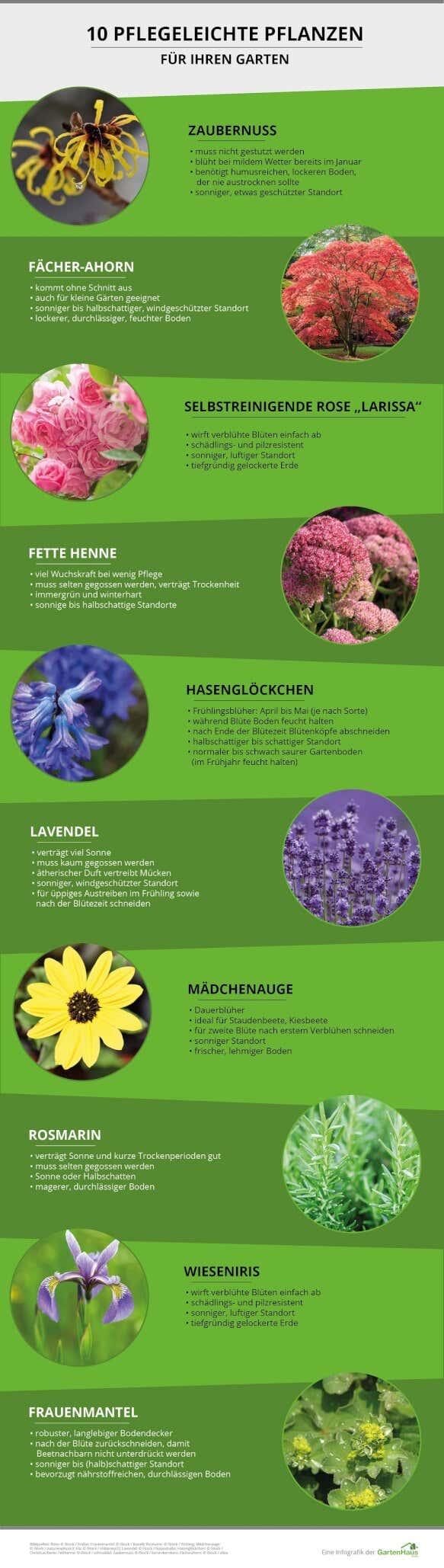 10 Pflegeleichte Pflanzen