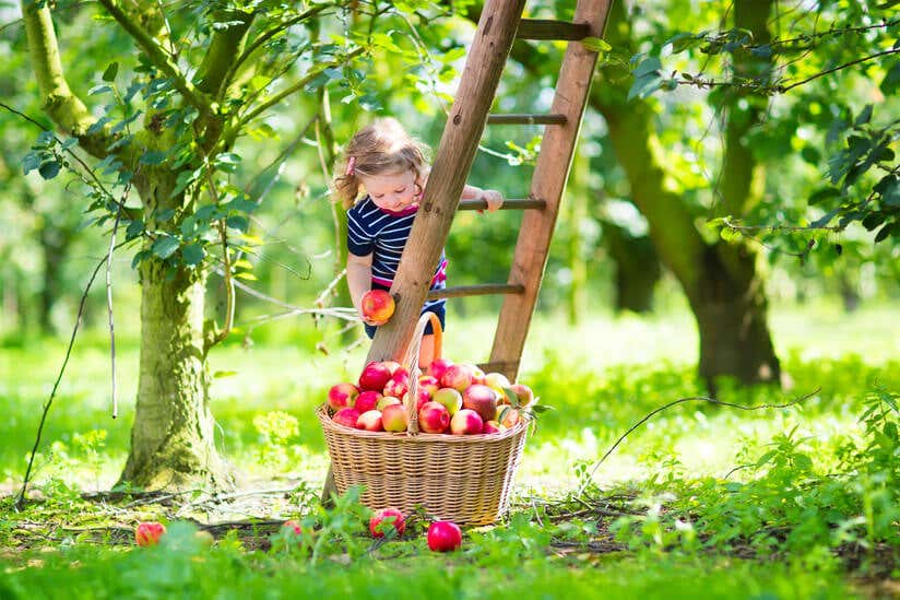 Mädchen pflückt Äpfel im Garten