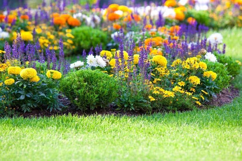 Buntes Blumenbeet Winterbeet