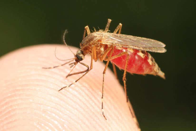 Mücken vertreiben: Diese (Haus)Mittel helfen wirklich!